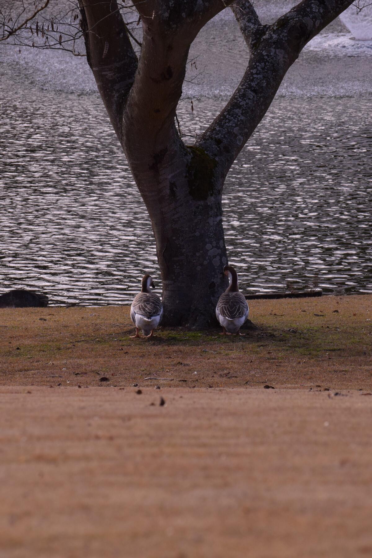 A4    木陰のカップル.JPG