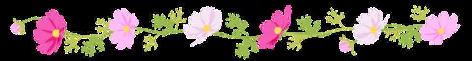 13秋桜フリー画像.png