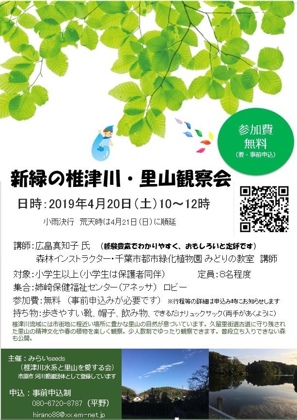 新緑の椎津川・里山観察会