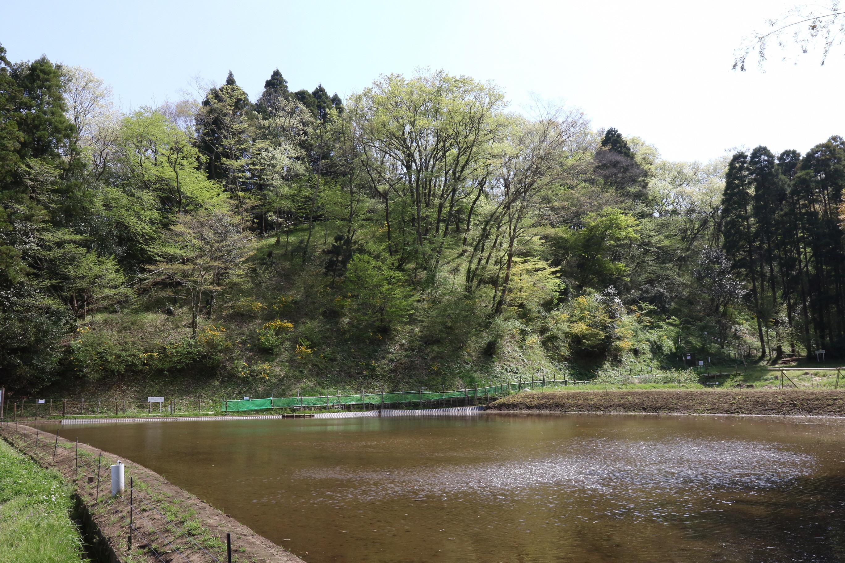 谷津田斜面の夏緑林.JPG