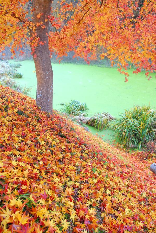 落ち葉の饗宴A.jpg
