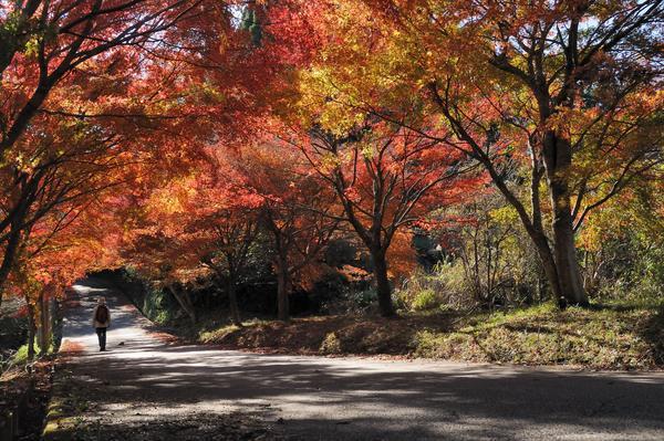 5林道紅葉.jpg