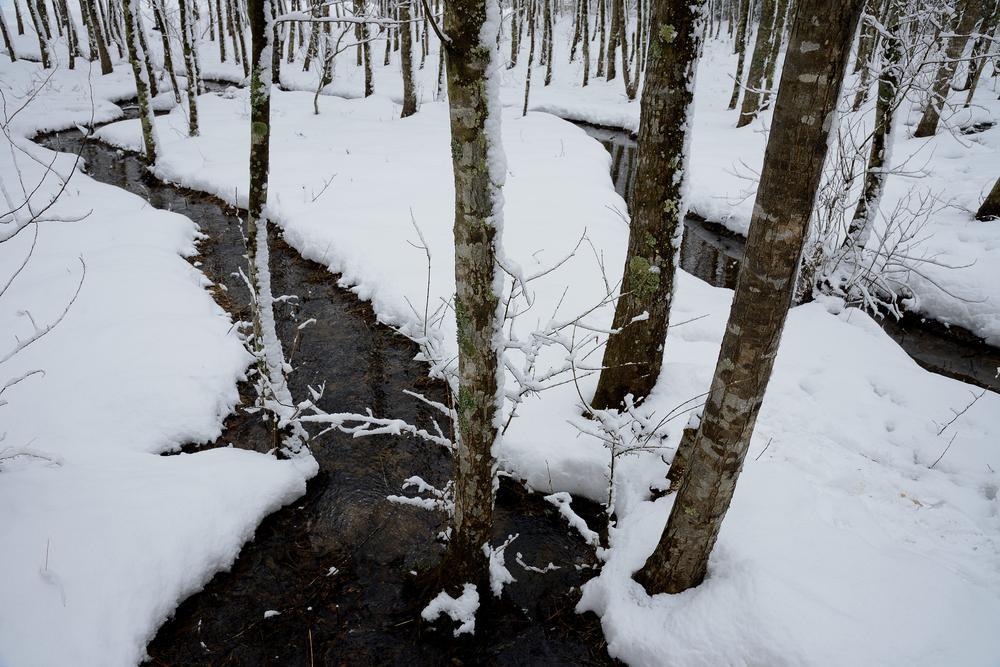 はん林雪2.jpg