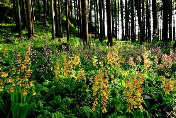 変更 林に咲く1.jpg